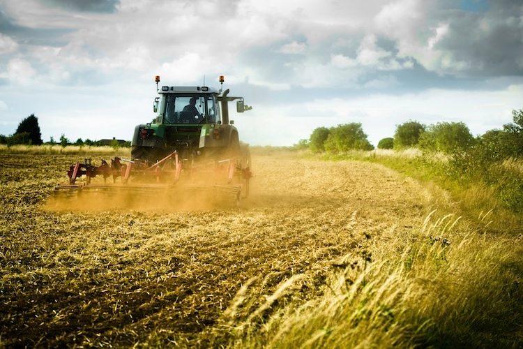 Dieci borse di studio per l'agricoltura