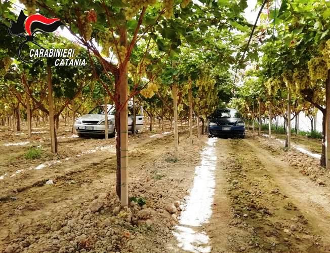 Licodia Eubea – Produttori di uva da tavola esasperati chiedono aiuto ai Carabinieri. Due catanesi arrestati per furto