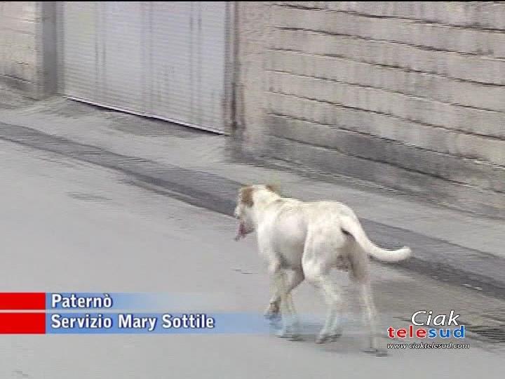 EX MACELLO, ANIMALISTI CHIEDONO CHIAREZZA